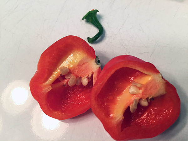 Caribbean Red Pepper