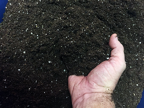 photo of soil mixture