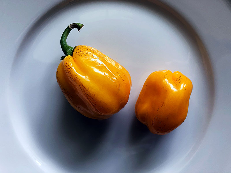 Aji Dulce pepper