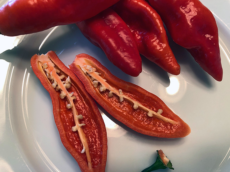 Ajo Rojo peppers