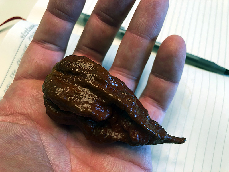 Kraken Scorpion photo