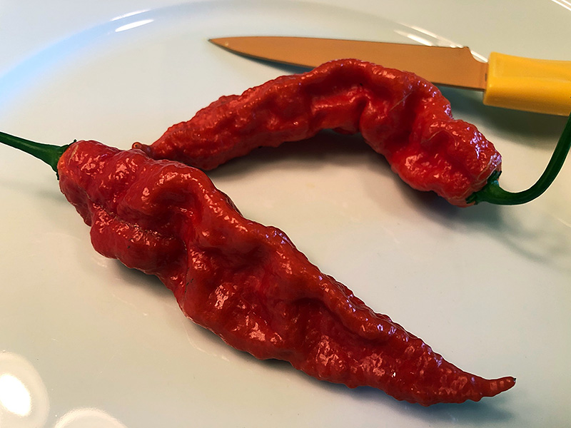 Naga Morich peppers