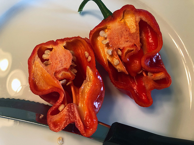 red bonda ma jacques pepper
